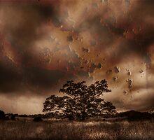 One tree by Rodney Trenchard