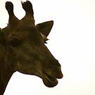 Giraffe by DUNCAN DAVIE
