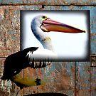 Pelican 2 by sparrowdk