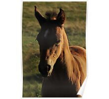 Fuzzy Forelock Poster