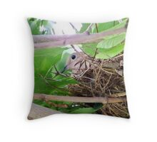 Morning Dove SItting in Her Nest Throw Pillow