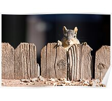 Squirrel on the fence Poster