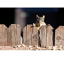 Squirrel on the fence Photographic Print