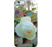 A Single White Rose iPhone Case/Skin