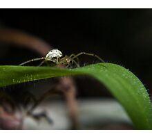 spider on grass blade Photographic Print