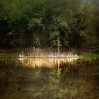 Mirror Me by TmacScapes