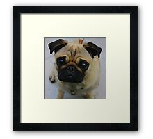 Puggin  Framed Print