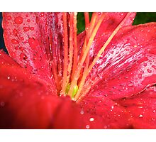 Asiatic Lily 1 Photographic Print