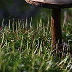 A Mushroom's Grass by Adam Bykowski