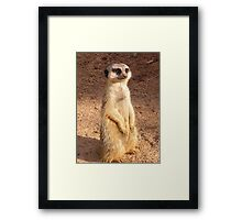 Meerly looking my very best for the camera . Framed Print