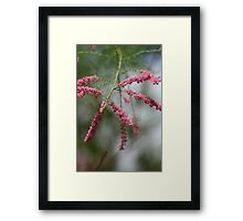 Soft touch. Framed Print