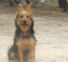 Drowned Rat by Edwina Hare