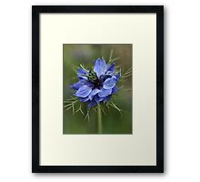 Going Soft Framed Print