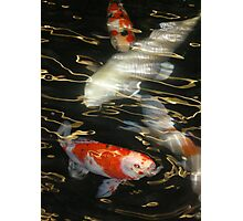 Swimming on Golden Currents Photographic Print