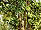 Green001 by Tridib Ghosh