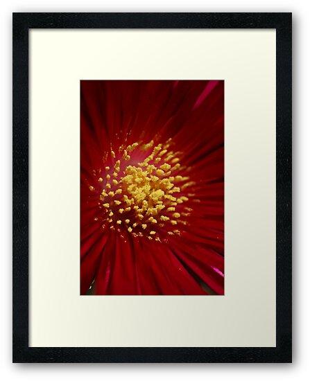 Pollen by Joy Watson