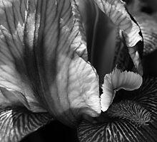 Iris's Tones by Joy Watson