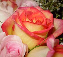 Multi-Hued Roses by lgPhotography