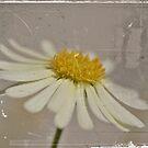 Olden Daise-y by Tamara Brandy
