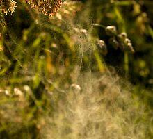 Pollen Eruption by Richard Hamilton-Veal