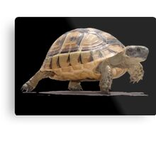 Marching Baby Tortoise Cartoon Vector Isolated Metal Print