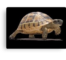 Marching Baby Tortoise Cartoon Vector Isolated Canvas Print