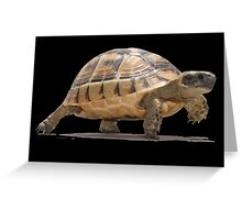 Marching Baby Tortoise Cartoon Vector Isolated Greeting Card