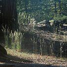Morning Lighting the Woods by Debbie Sickler