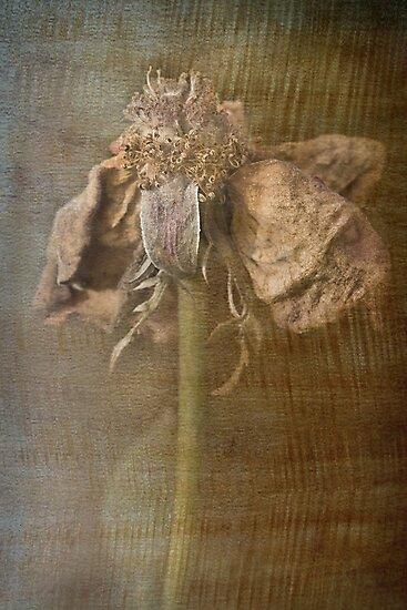 Rust 'n Roses ~ #3 by Rosalie Dale
