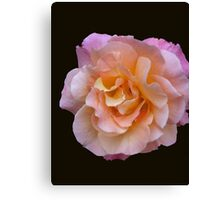 Peach and Pink Rose Canvas Print