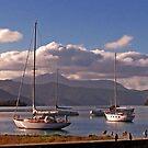 Ship Cove, Picton, NZ by John Brotheridge