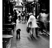 Dog In Melbourne Photographic Print