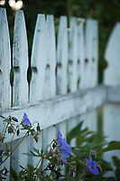 Weathered Pickets by back40fotos