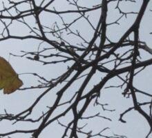 Holding On: The Last Leaf, Dublin, Ireland Sticker