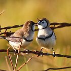 Love Birds by David de Groot