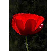 The Poppy Photographic Print