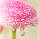 Drop on Pink by Barb Leopold