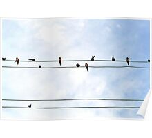 birds on wire Poster