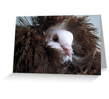 Tucked up in my  Feathers Greeting Card