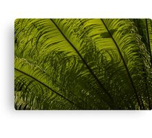 Tropical Green Curves and Diagonals Canvas Print