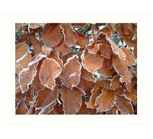 Icy Leaves Art Print