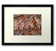 Icy Leaves Framed Print