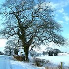 Wintery Tree by TREVOR34