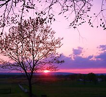 tree sunset by schiabor