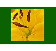 Day Lily Dazzler © Photographic Print