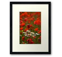 Poppies and Daises Framed Print
