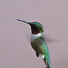 Male Rubby Throated by lloydsjourney