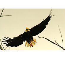 Freedom Flight Photographic Print