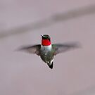 Hovering Hummingbird by lloydsjourney