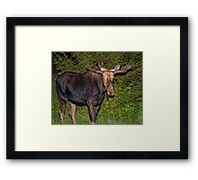 Nightwalker: Bull Moose Framed Print